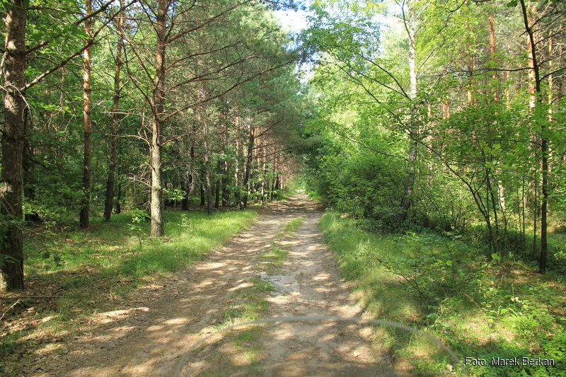 Leśna droga na zachód od miejscowości Brok