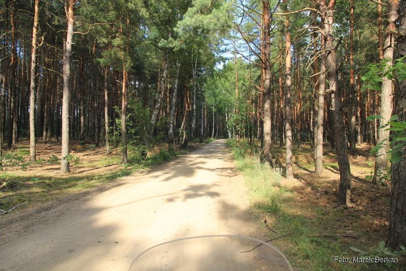 Las pomiędzy Klukowem a Małkinią