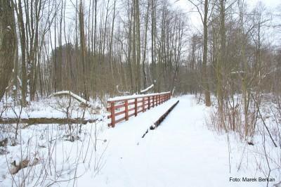 Zielony szlak na południe od Zaborowa Leśnego