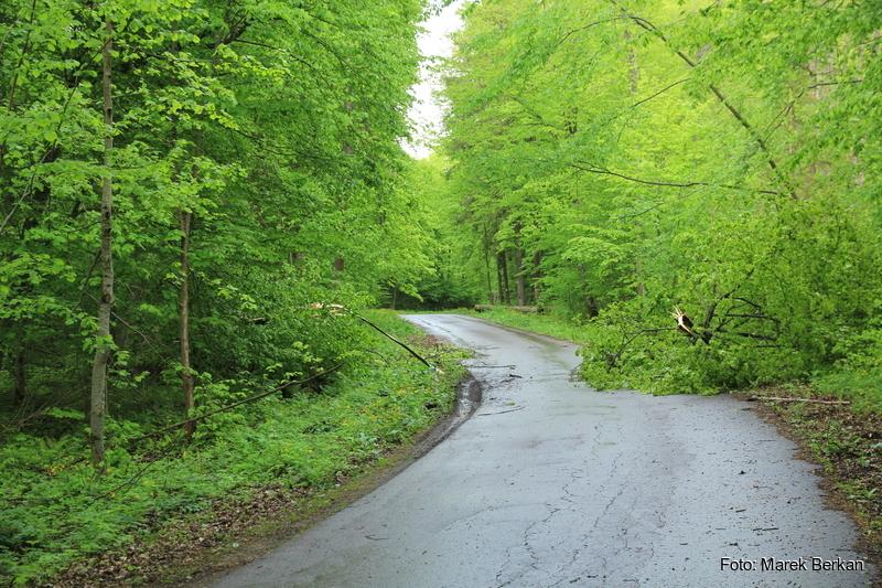 Droga przez Puszczę Borecką