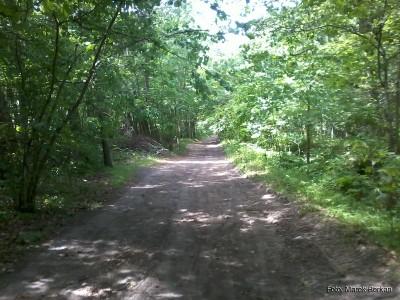 Droga leśna Karwia - Dębki