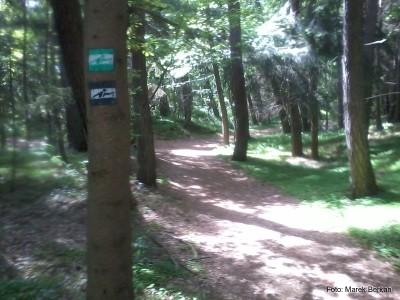 Trasa Nordic Walking wzdłuż Dębek