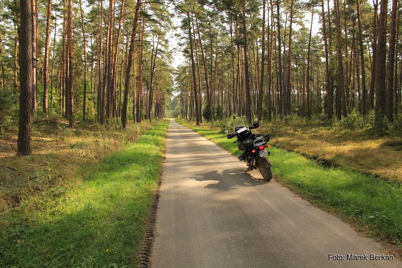 Piękna droga leśna