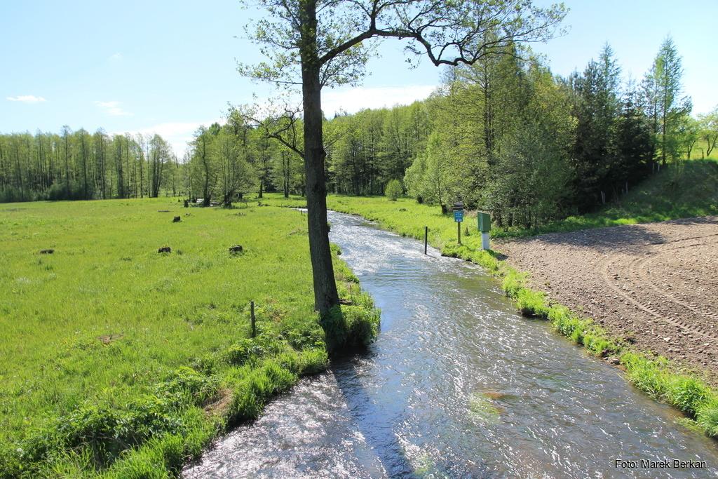 Rzeka Czarna Hańcza koło miejscowości Sobolewo