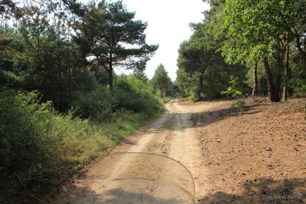 Droga pomiędzy Obrzyckiem i Wronkami