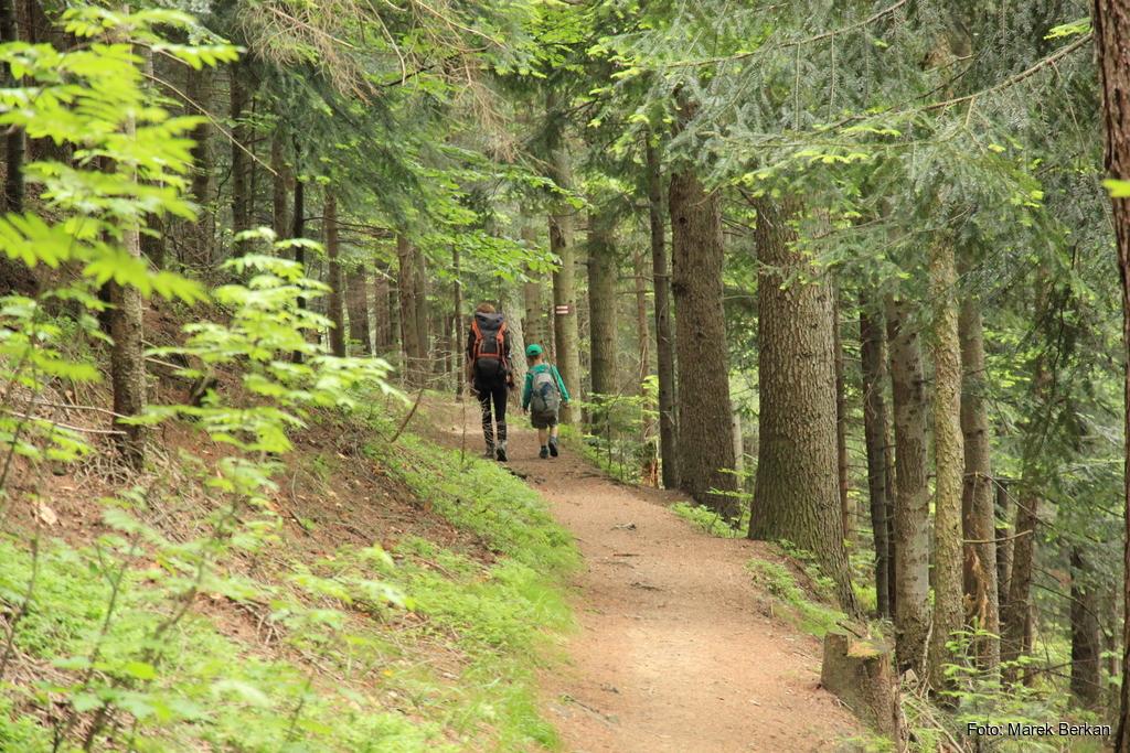 Czerwony szlak ze Skrzycznego do Buczkowic koło Szczyrku