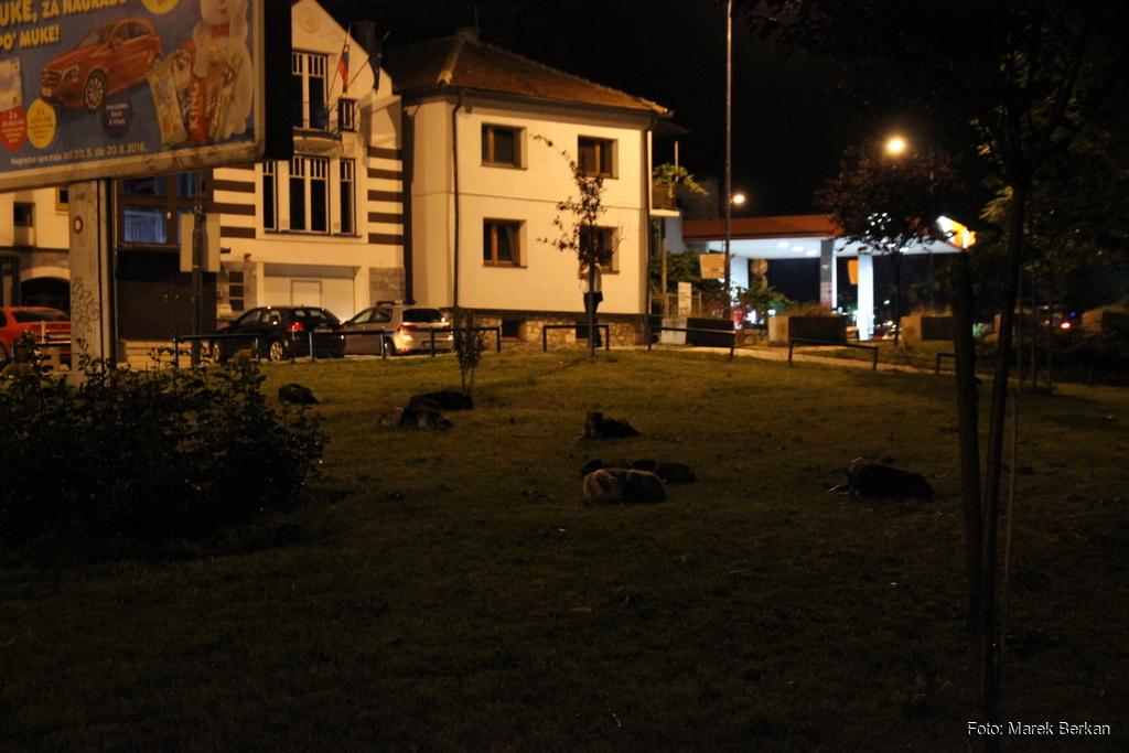 Sarajewo nocą - ciekawostka: śpiące psy