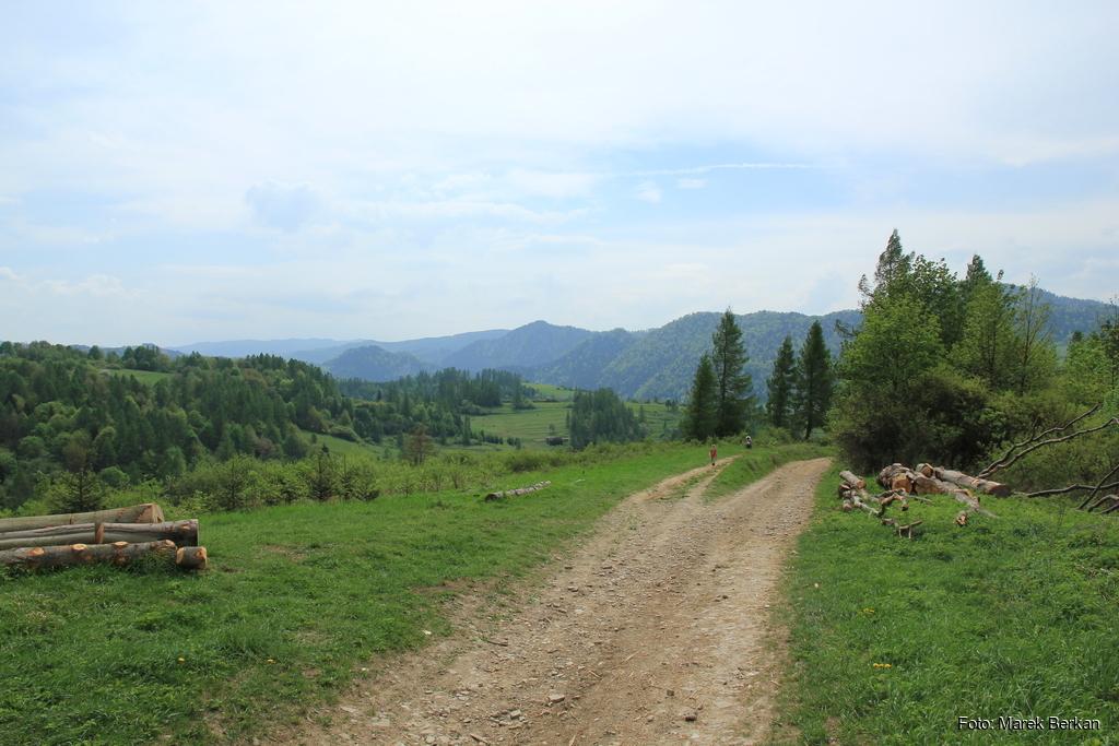 Czerwony szlak z Krościenka w kierunku Skałki