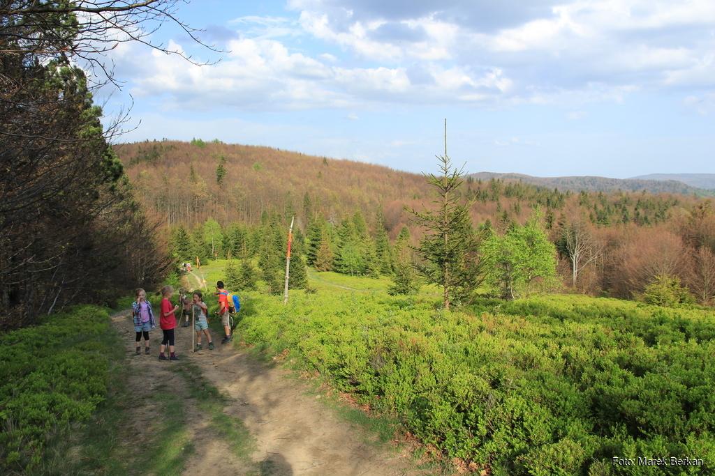 Czerwony szlak w kierunku Hali Łabowskiej